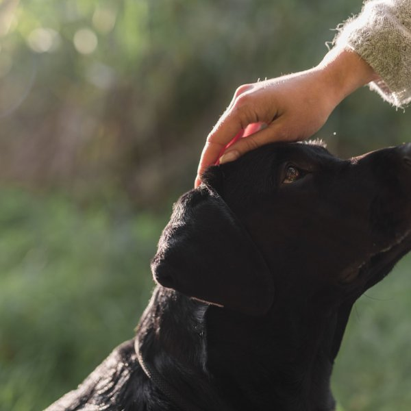 Who has custody of pets after a divorce?